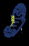 Tournoi de Volley-ball organisation